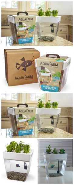 An Aquarium for your Fish and Growing Herbs