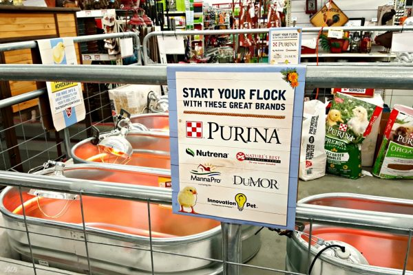 Purina Pullets Food At Tractor Supply